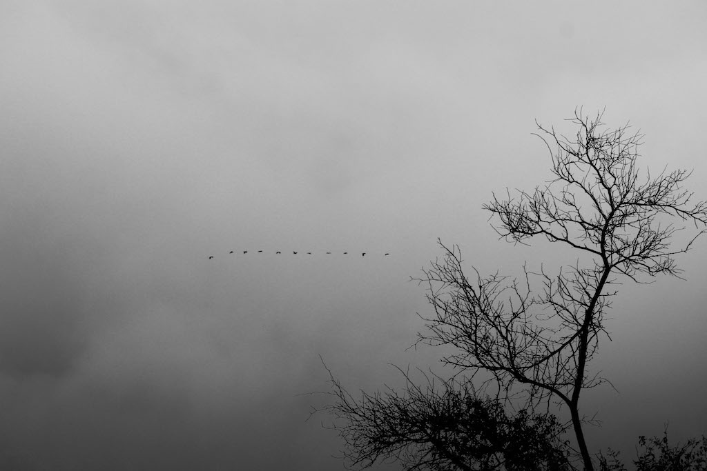 BW birds