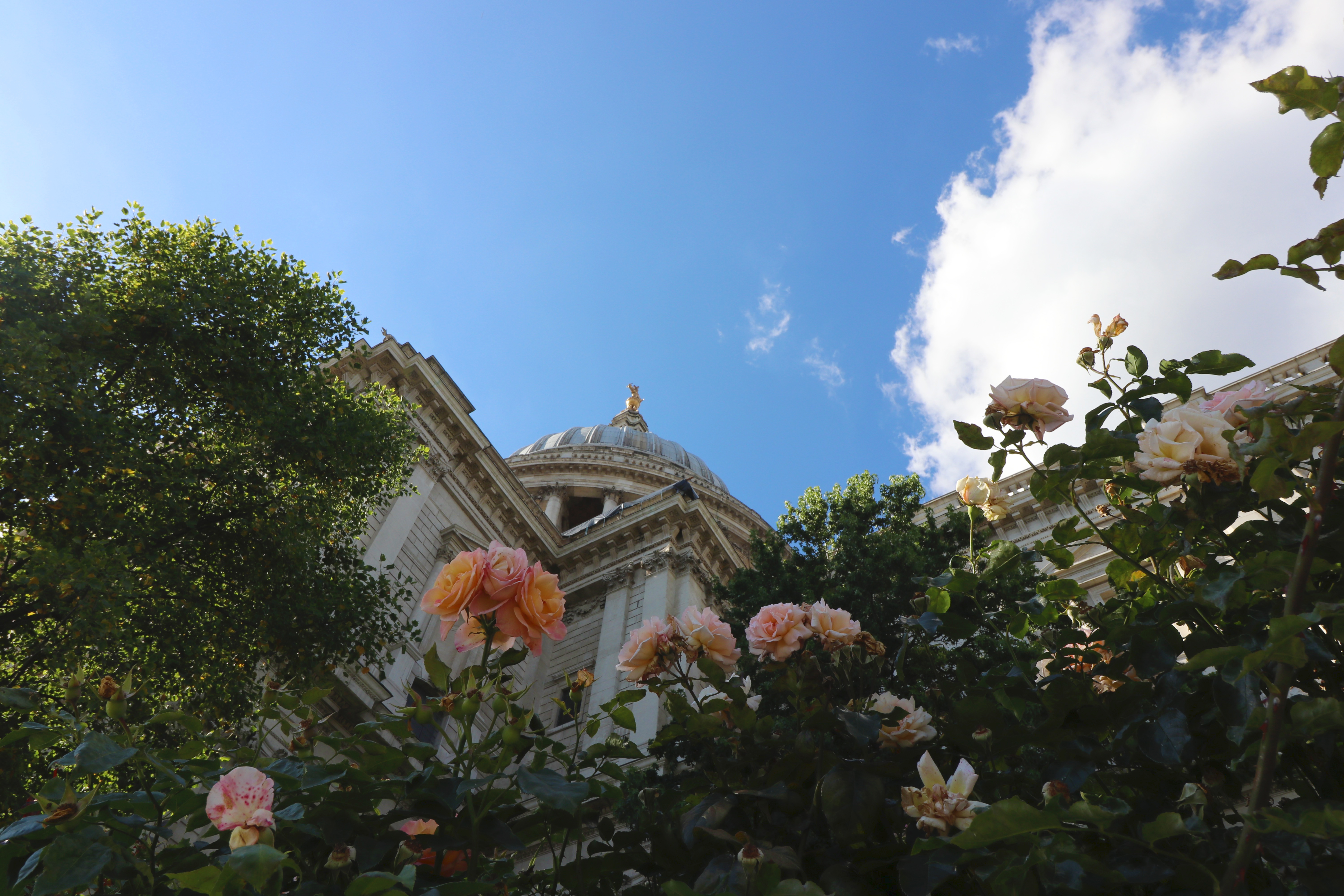 english-roses-at-st-pauls-cathedral-copy