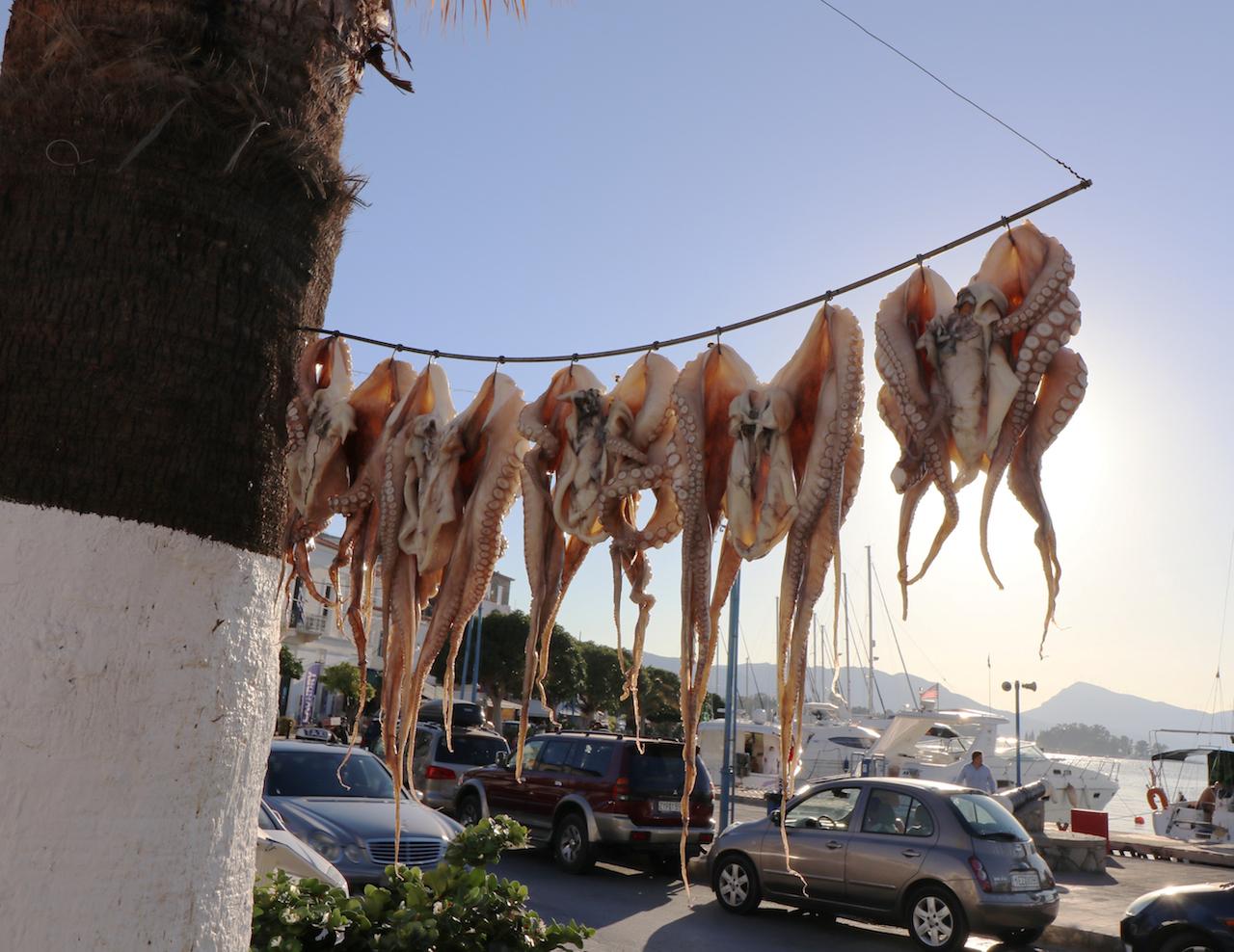 hanging-octopus-copy