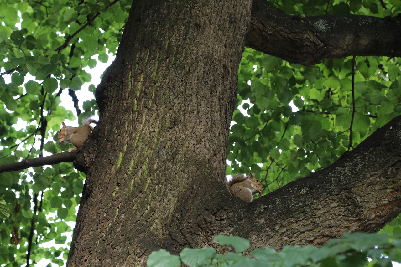 Squirrels copy